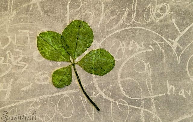 Photographie d'un trèfle à quatre feuilles vert collé sur un mur gris.