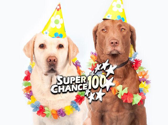 Photographie de deux chiens costumés.